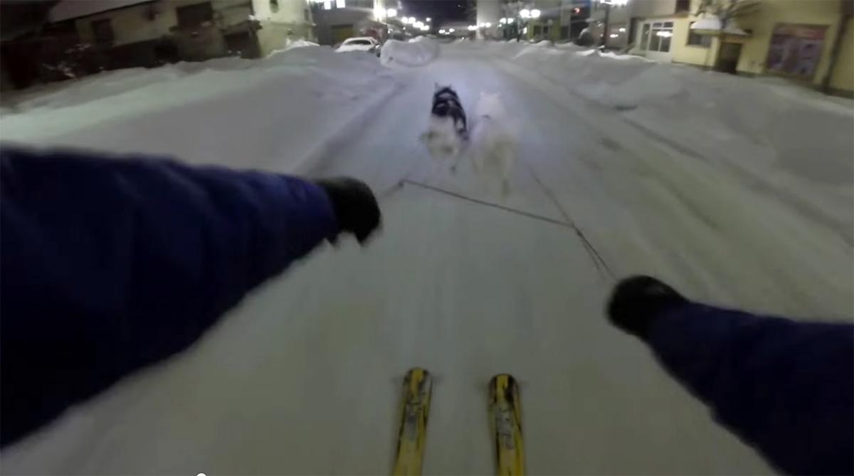 semir-dog-sledding