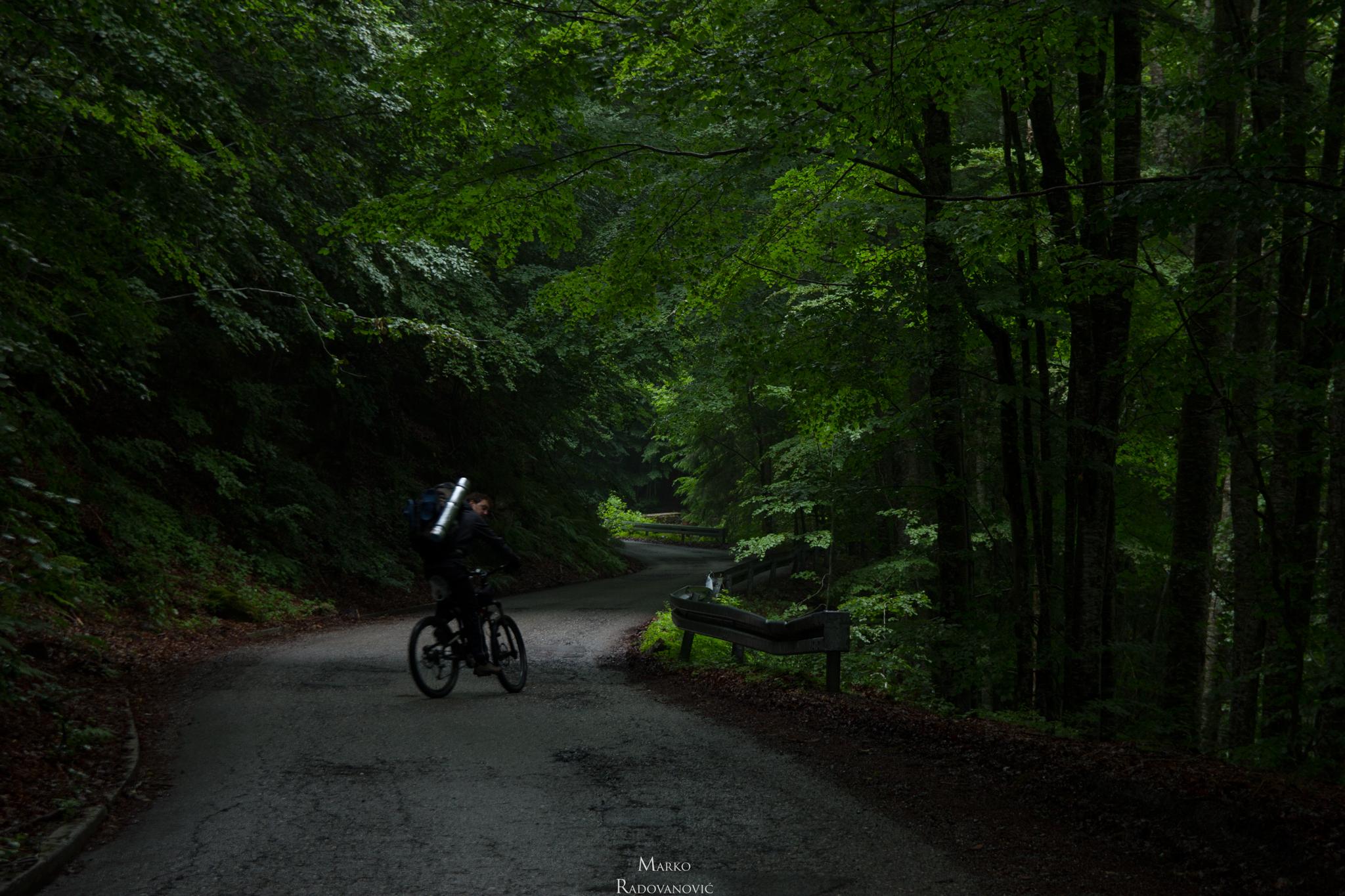 06-Iz Bara kraljskih do Trešnjevika kroz predivnu bukovu šumu