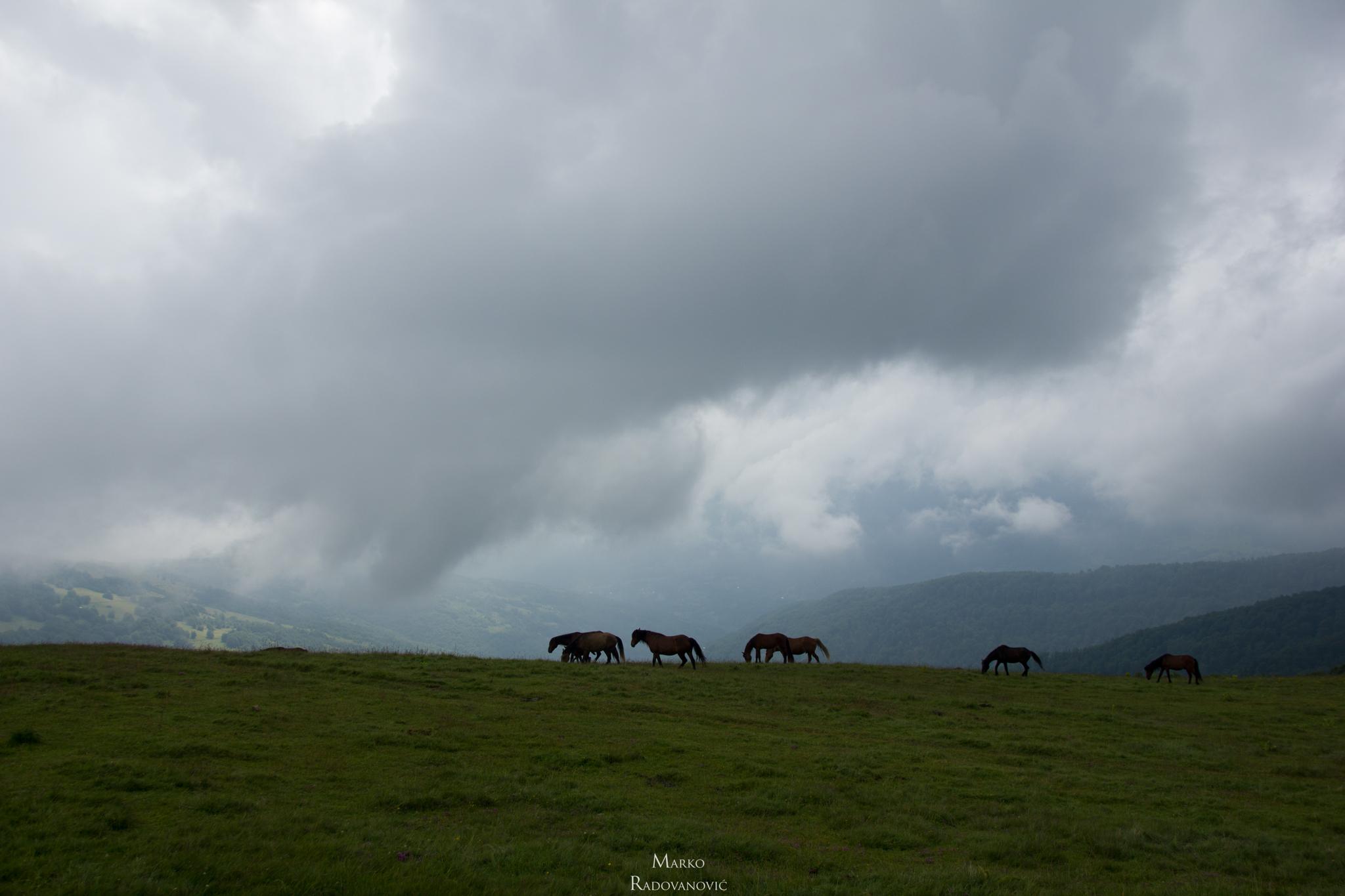 09-Katun Štavna. Konji mirno pasu a mi nismo hteli da ih uznemiravam