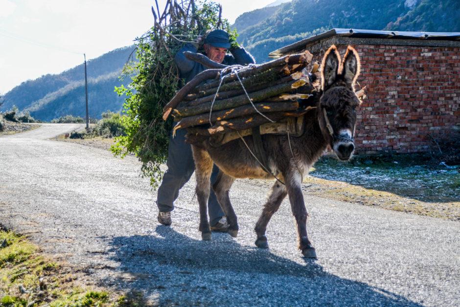 004-old-school-nacin-pripremanja-drva-za-zimu-magarac-je-u-albaniji-najbolji-covjekov-prijatelj